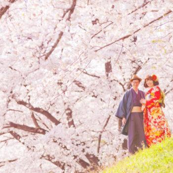 鮮やかな桜に包まれて