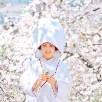 白無垢で桜