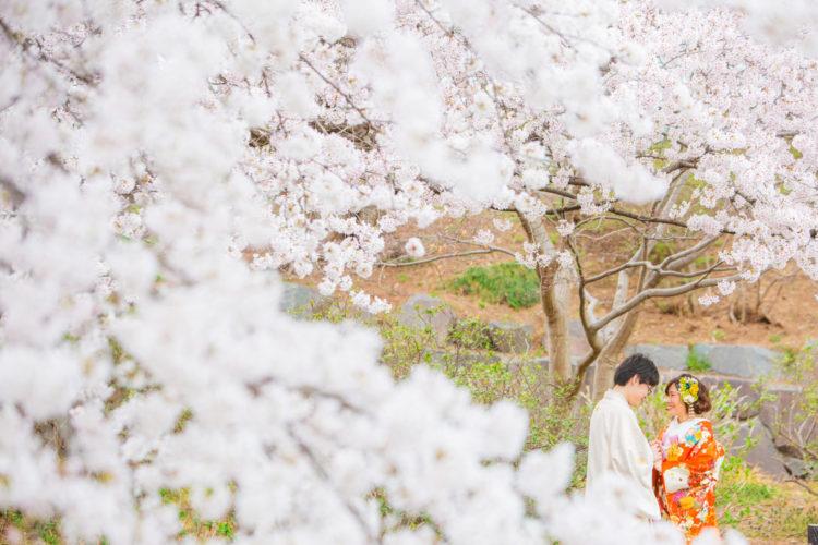 桜ロケもいよいよ近づいてきました!