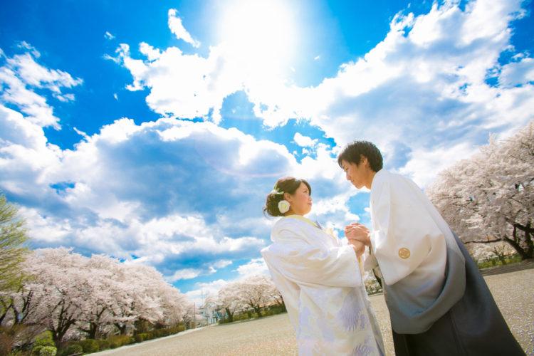 今日も桜と青空で1枚行きましょう!