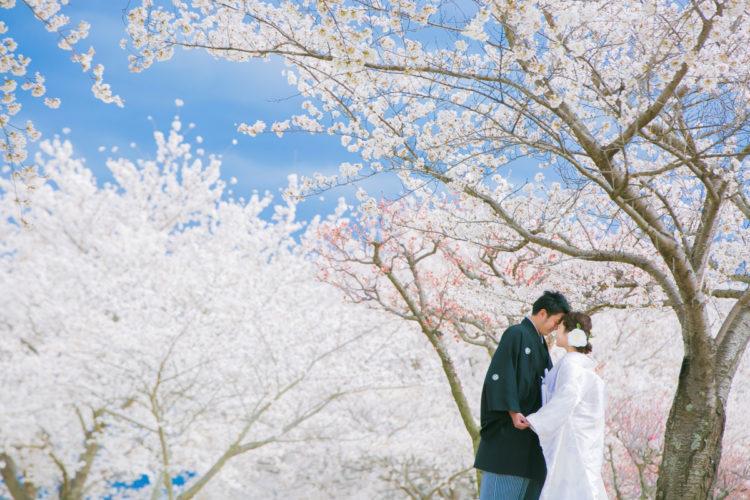 桜と青空と一緒にフォトウエディング