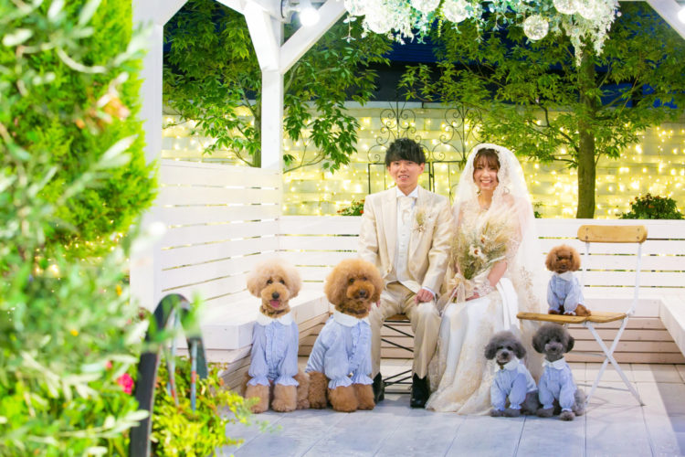 Photo with dogs
